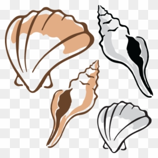 Clam clipart limpet. Free png clip art