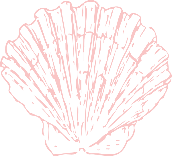 Shell clipart clam sketch. Seashell sea pinterest clip