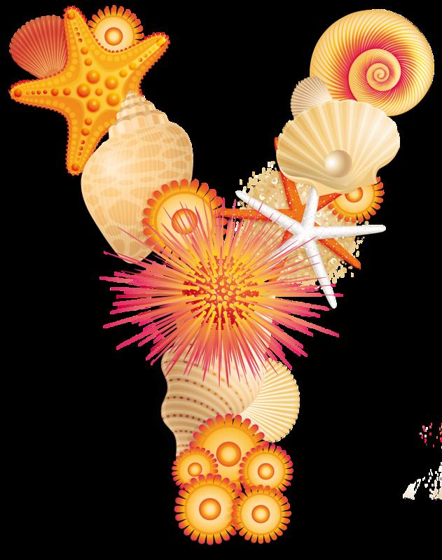 Moana clipart shell. Z png pinterest alphabet
