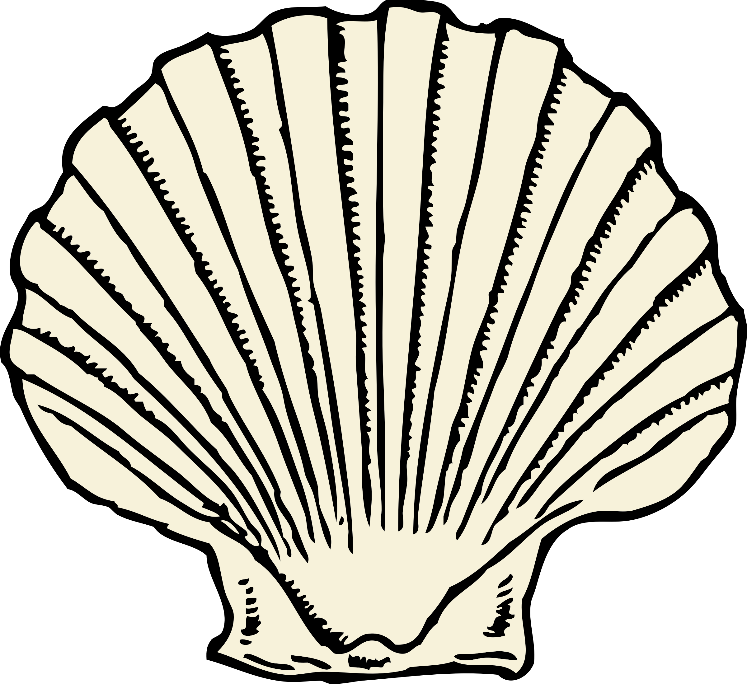 scallop shell by