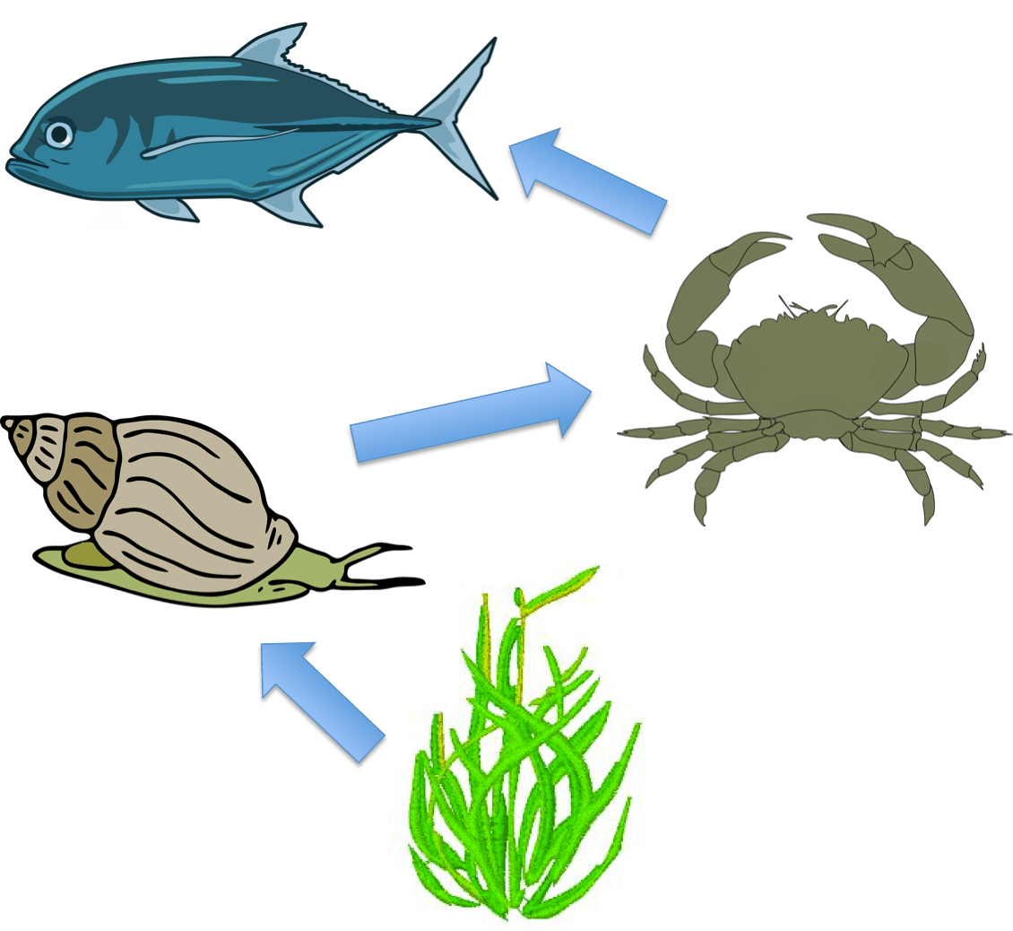 Ocean clipart ocean environment. All food does not