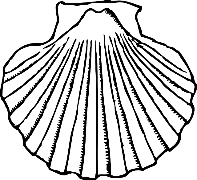 Line at getdrawings com. Shell clipart mussel drawing