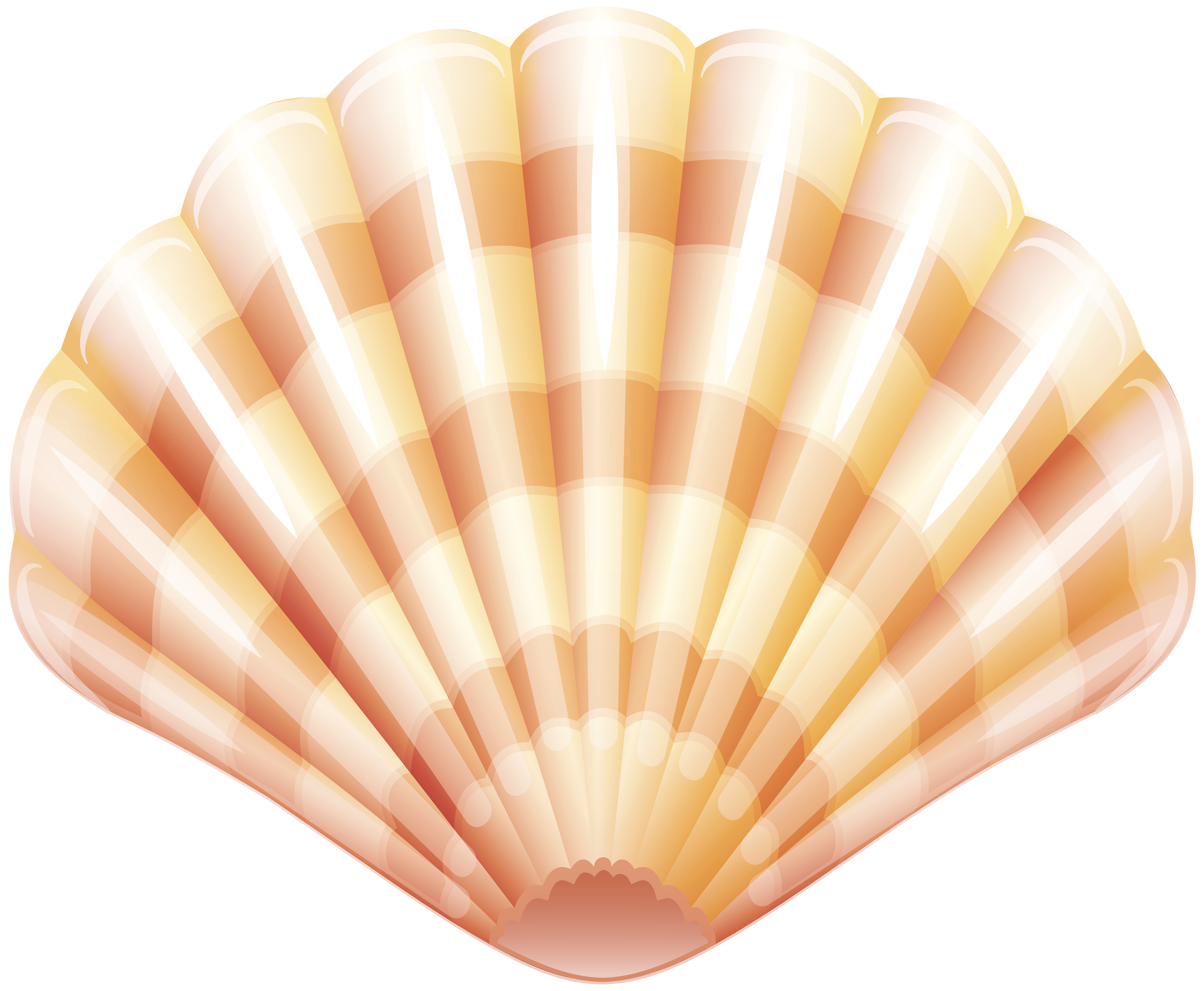 Sea clam shell png. Goat clipart parliamentary procedure