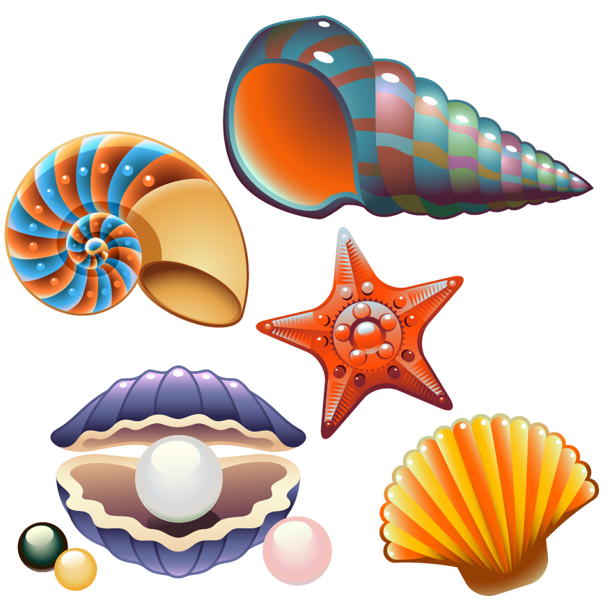 Clam nautilidae clip art. Orange clipart seashell