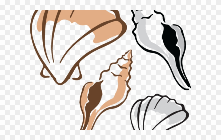 Shell clipart fish. Clams clip art png