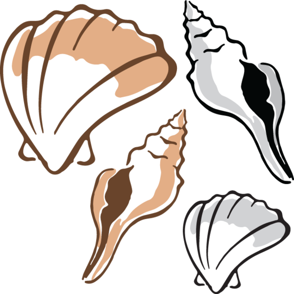 Clipart shapes seashell. Clam at getdrawings com