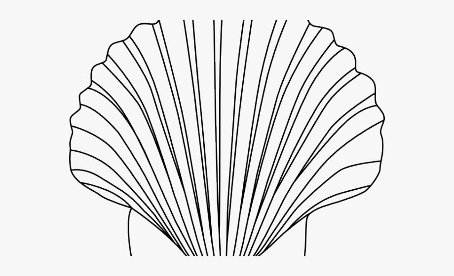 Shell clipart small. Clip art free
