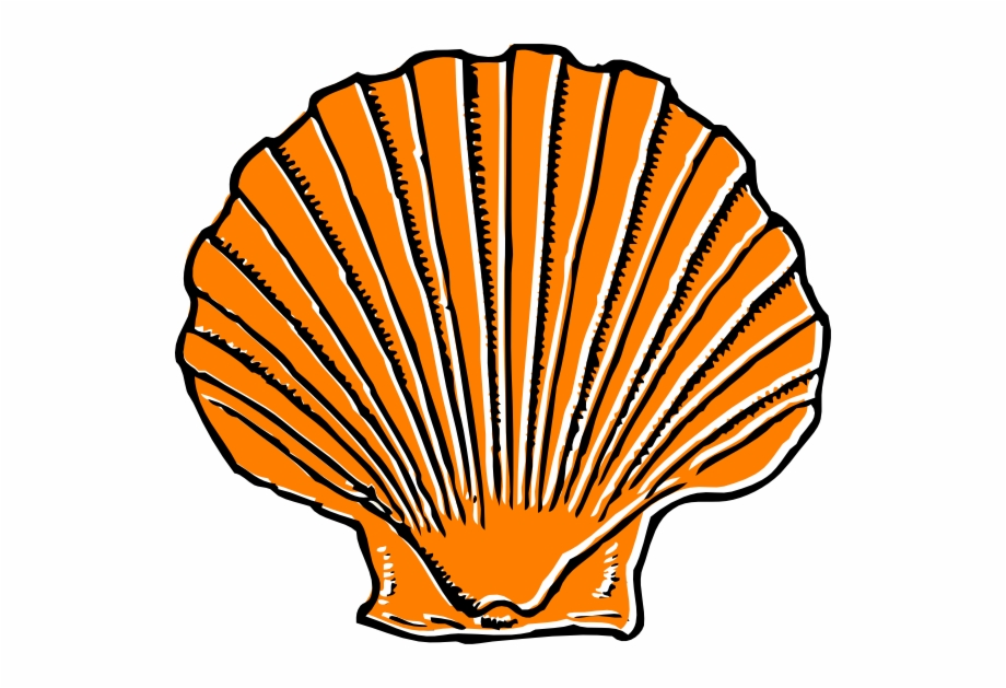 Sea free png images. Shell clipart small