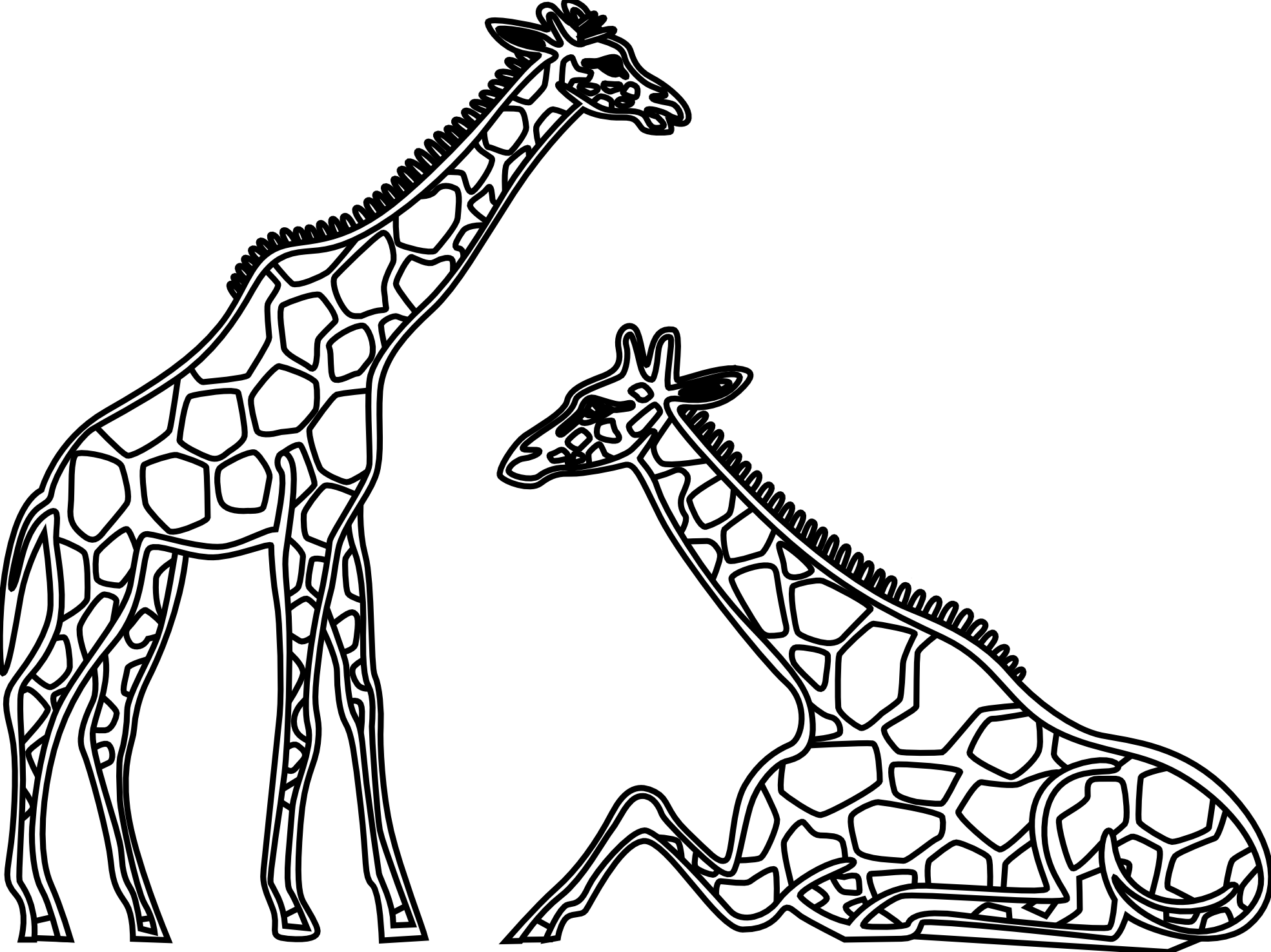 Giraffe clipart terrestrial animal. Line drawing google search