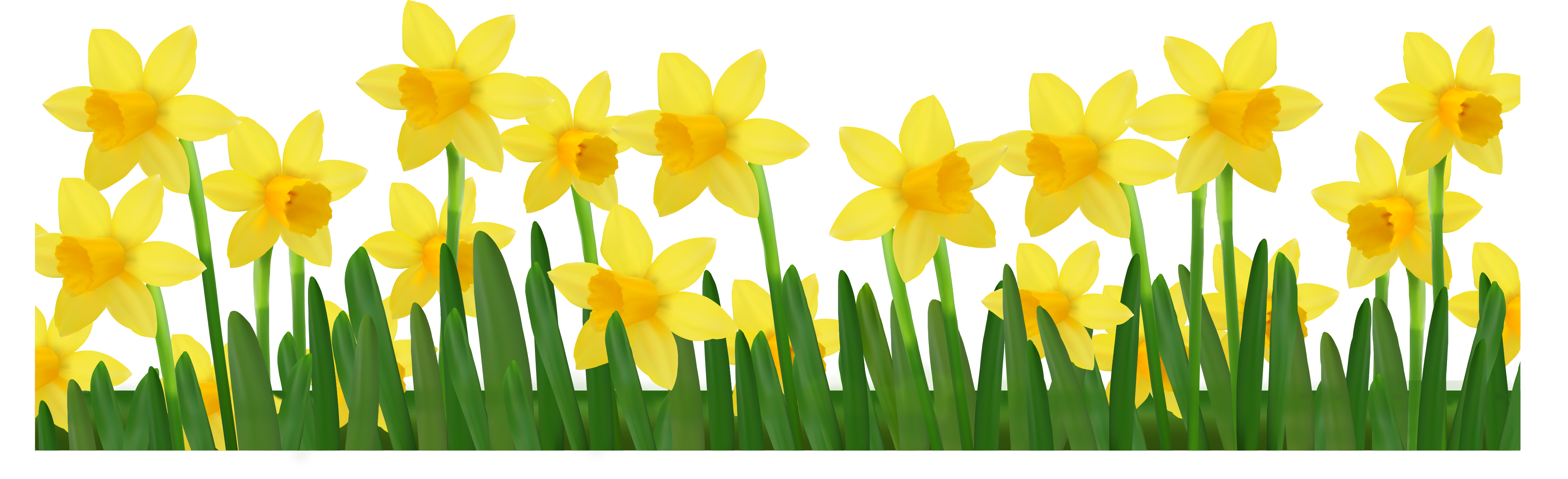 Gardening clipart city. Grass with daffodils png