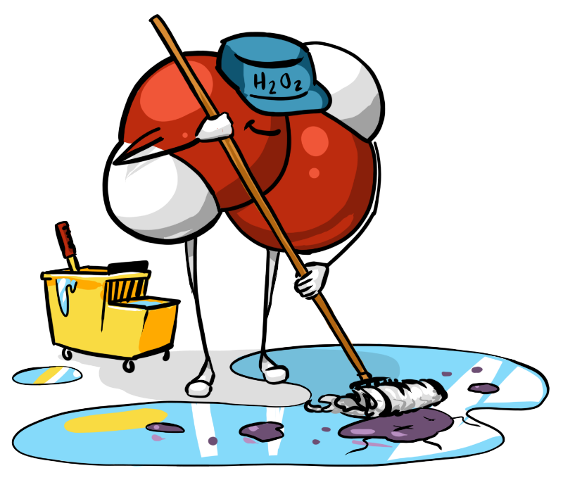 Clean clipart sanitation. The basics of float