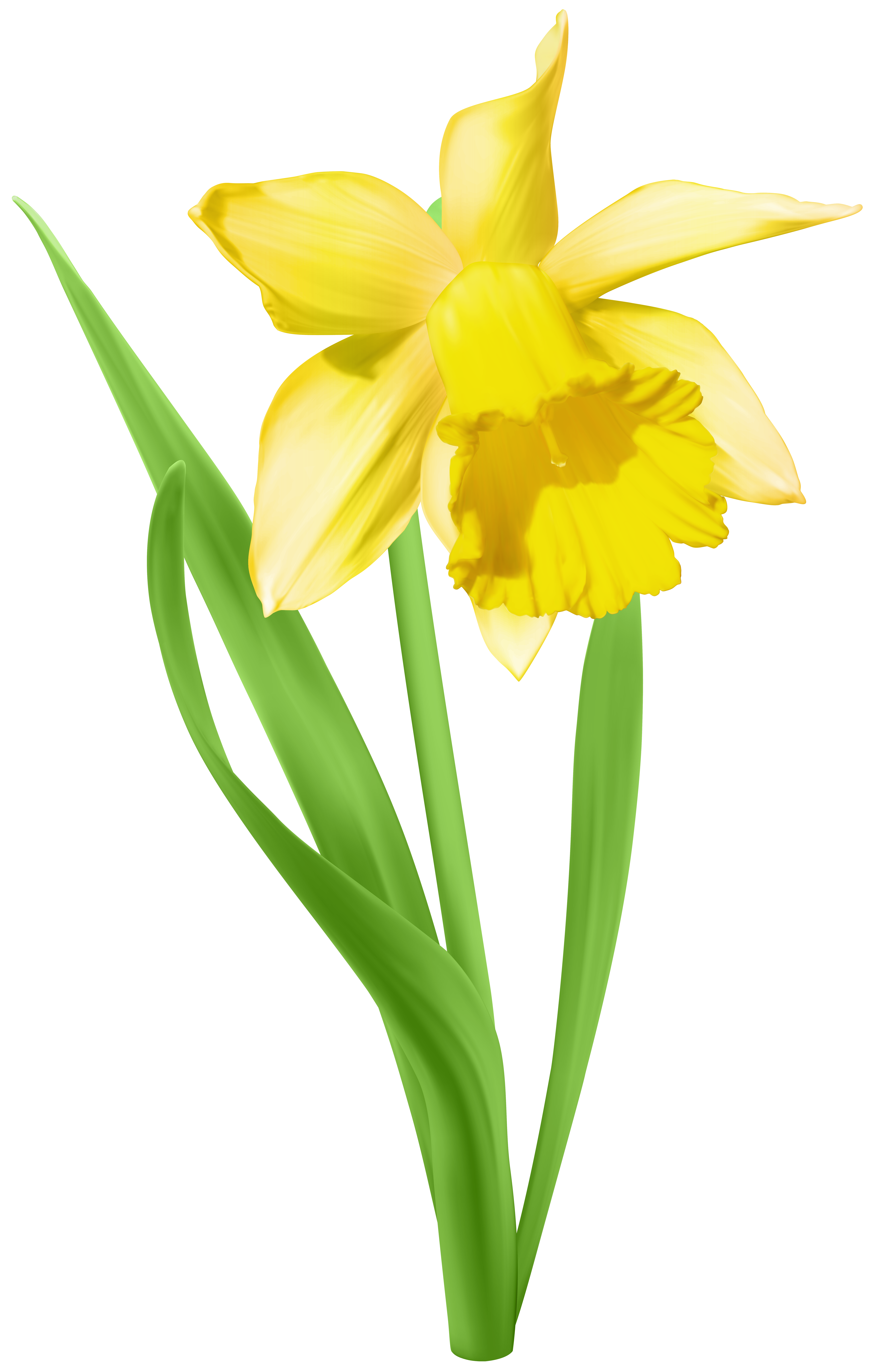 Clipart borders daffodil. Transparent background