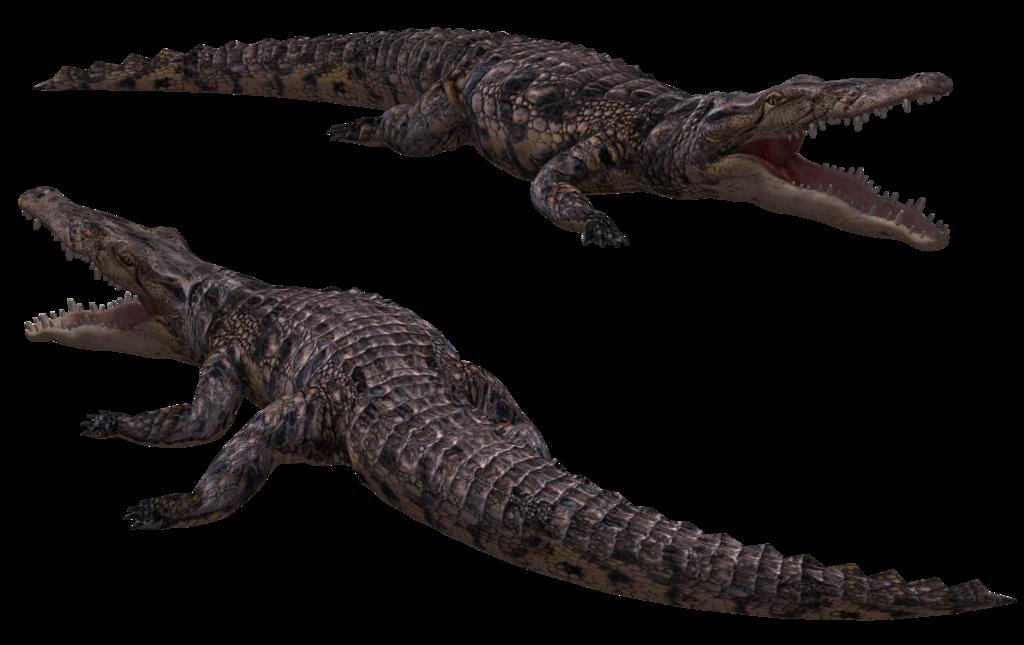 Water clipart alligator. Crocodile png transparent images