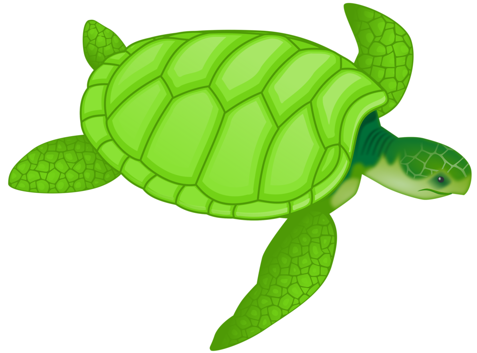 Pet clipart pet tortoise. Turtle free stock photo