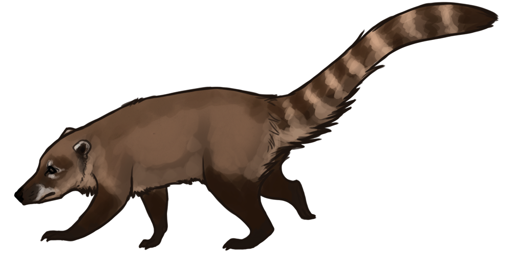 Hymnsies photo coati pizote. Wildcat clipart dinosaur claw