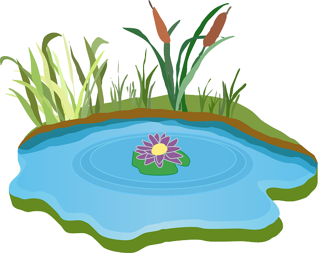 Free image on pixabay. Clipart duck pond clipart