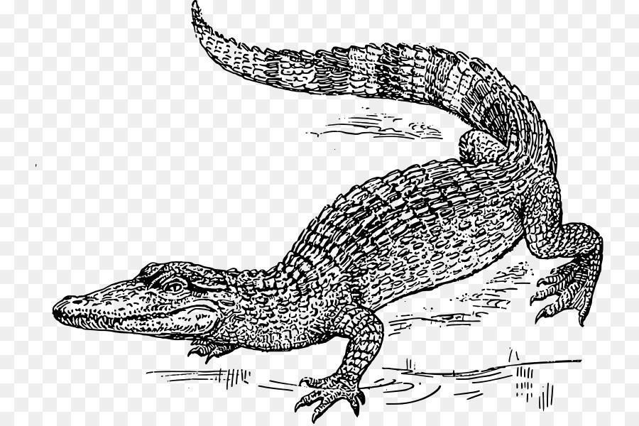 Alligator cartoon png download. Swamp clipart crocodile swamp