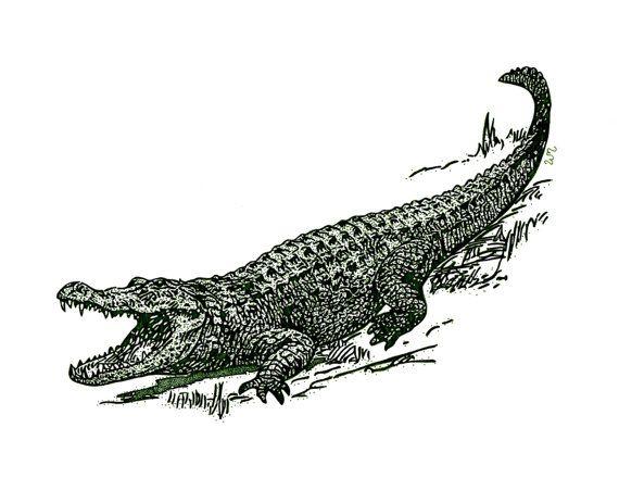 Gator clipart swamp louisiana.  x or green
