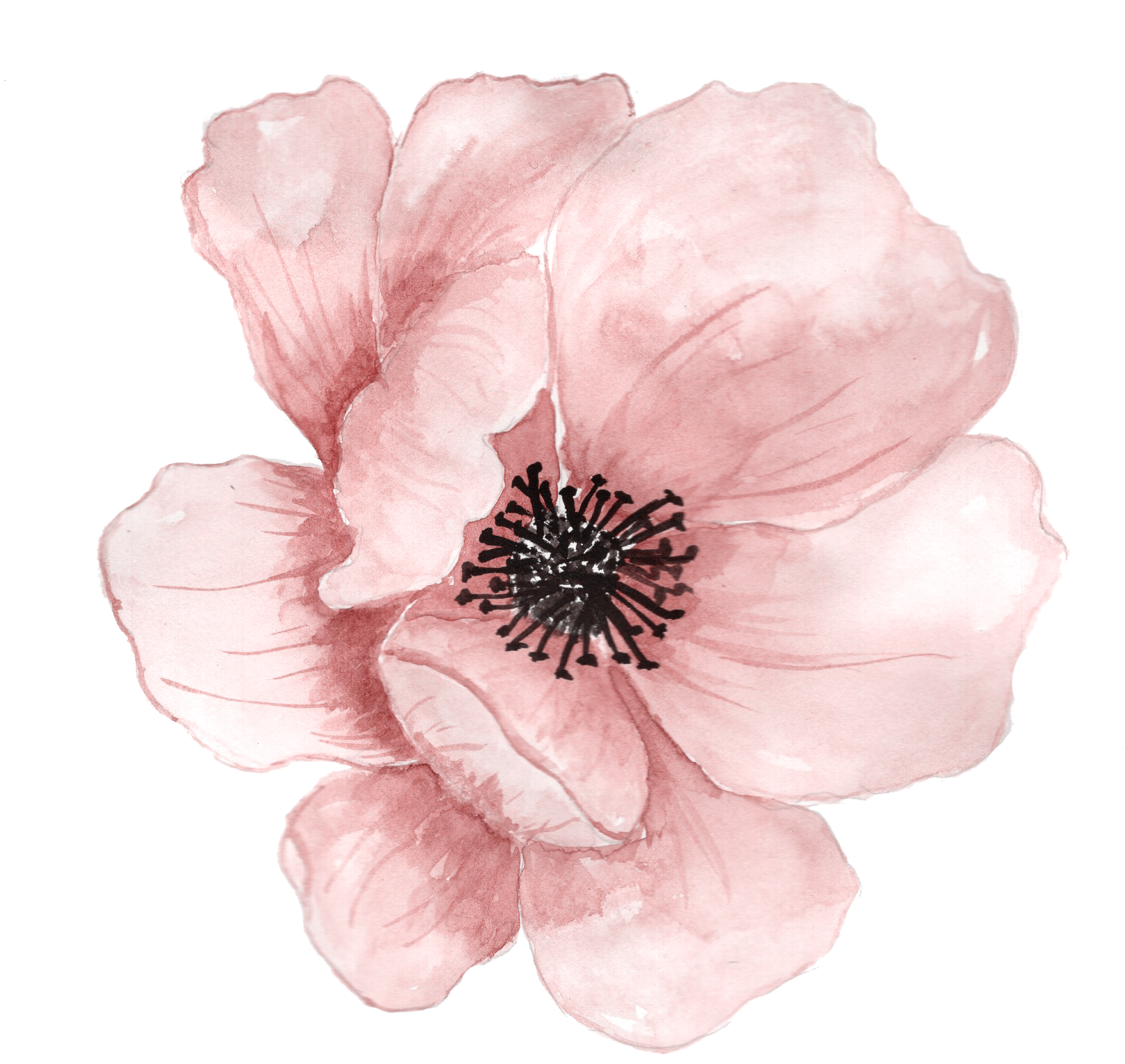 Watercolor painting clip art. Poppy clipart coral flower