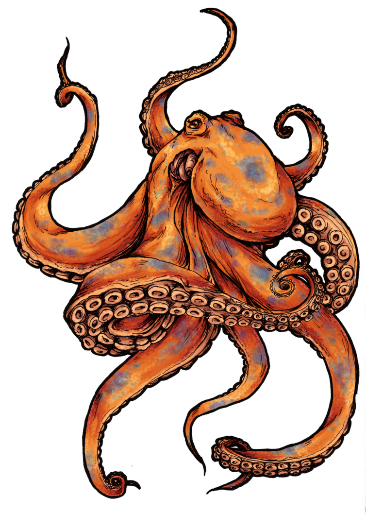 Tattoos designs and pictures. Octopus clipart happy octopus