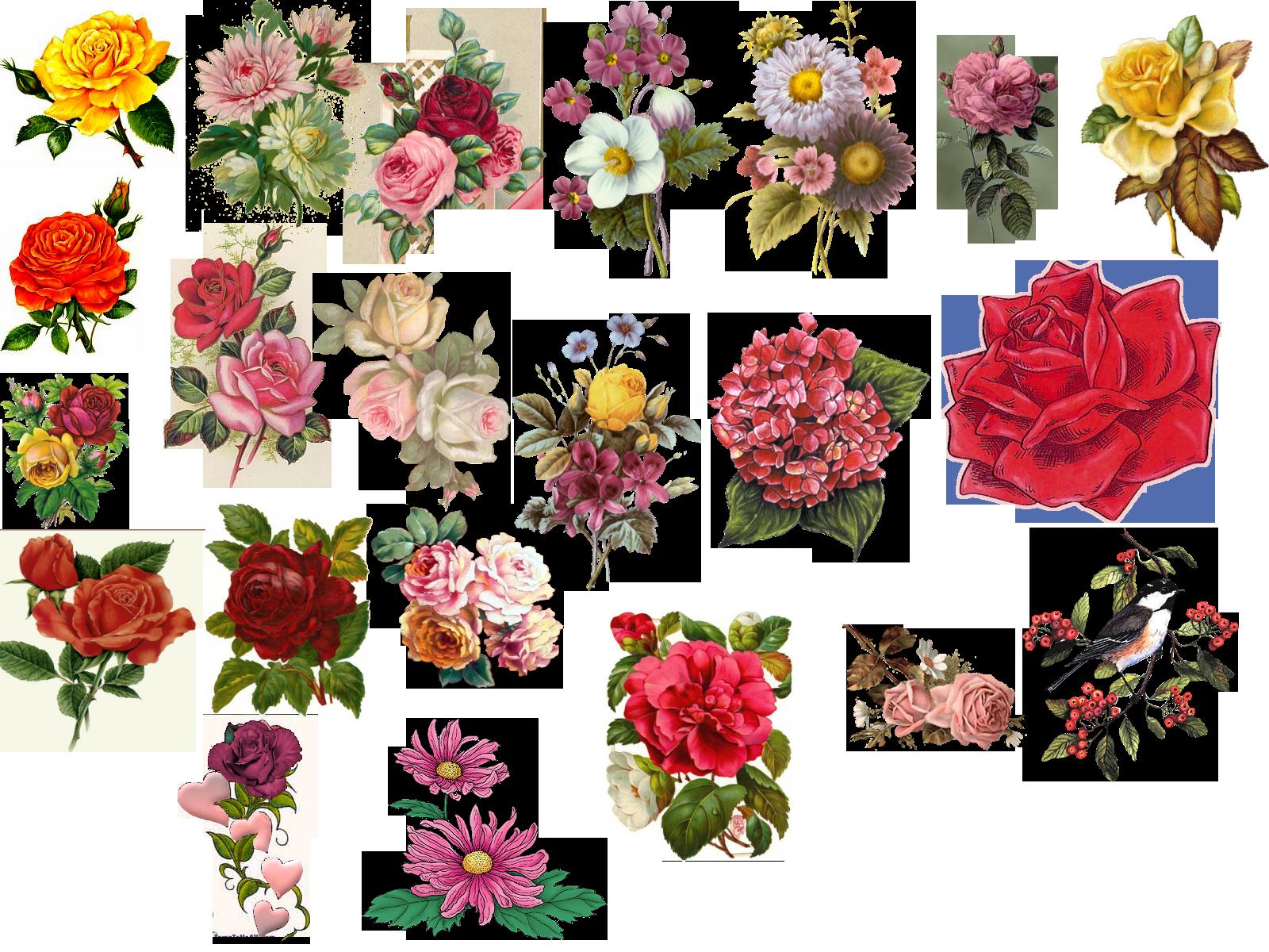Vintage flower pictures beautiful. Heaven clipart glories