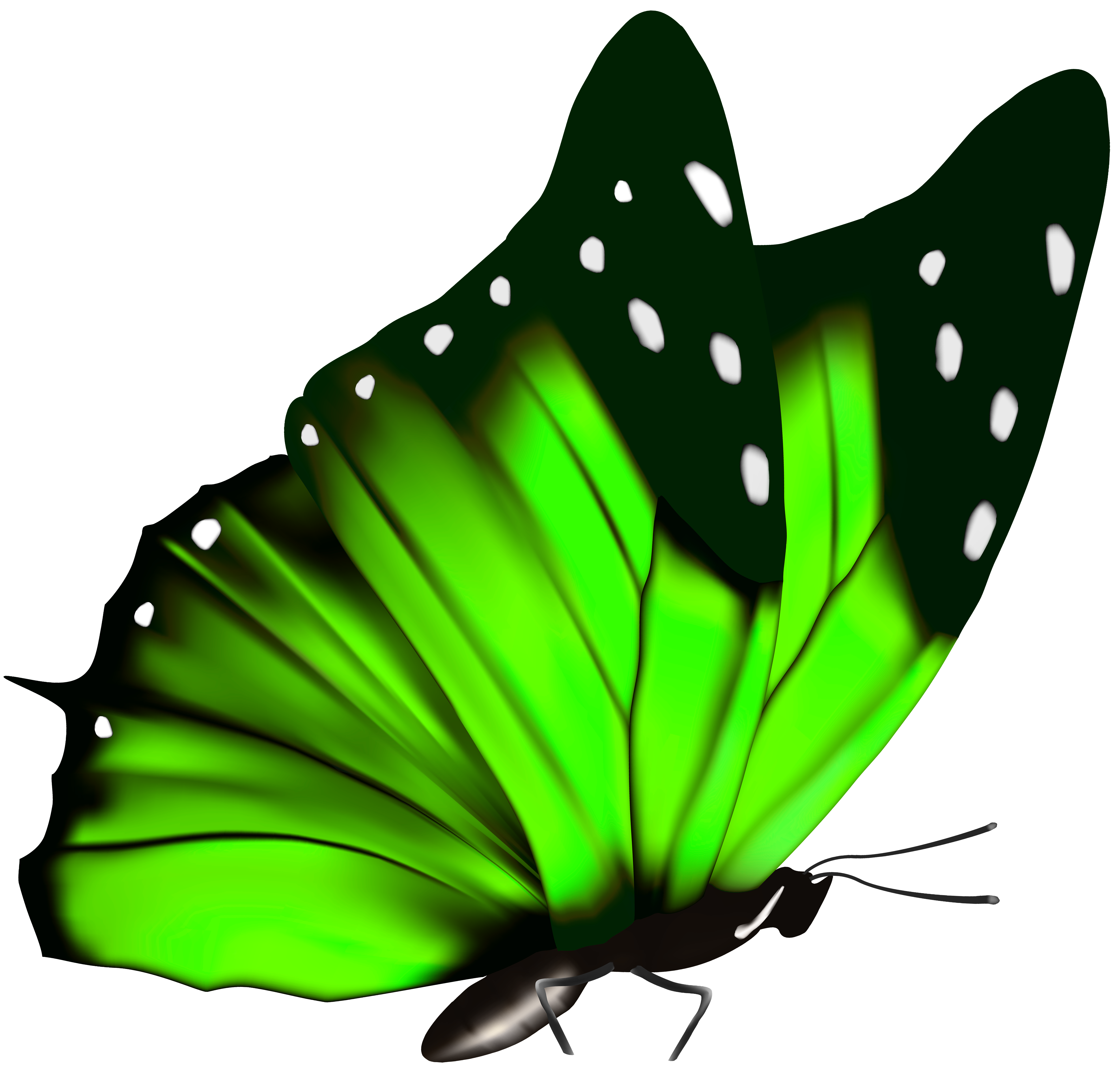 Steampunk clipart flight wing. Green butterfly png image