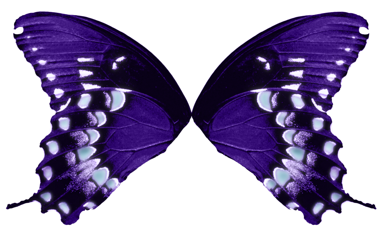 Moth clipart transparent tumblr. Butterfly wings purple aqua