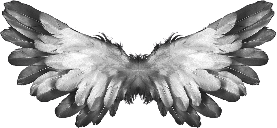 Wing clipart animal wing. Angel wings feathers transparent