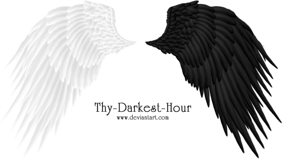 Angel wings png by. Wing clipart wing hd