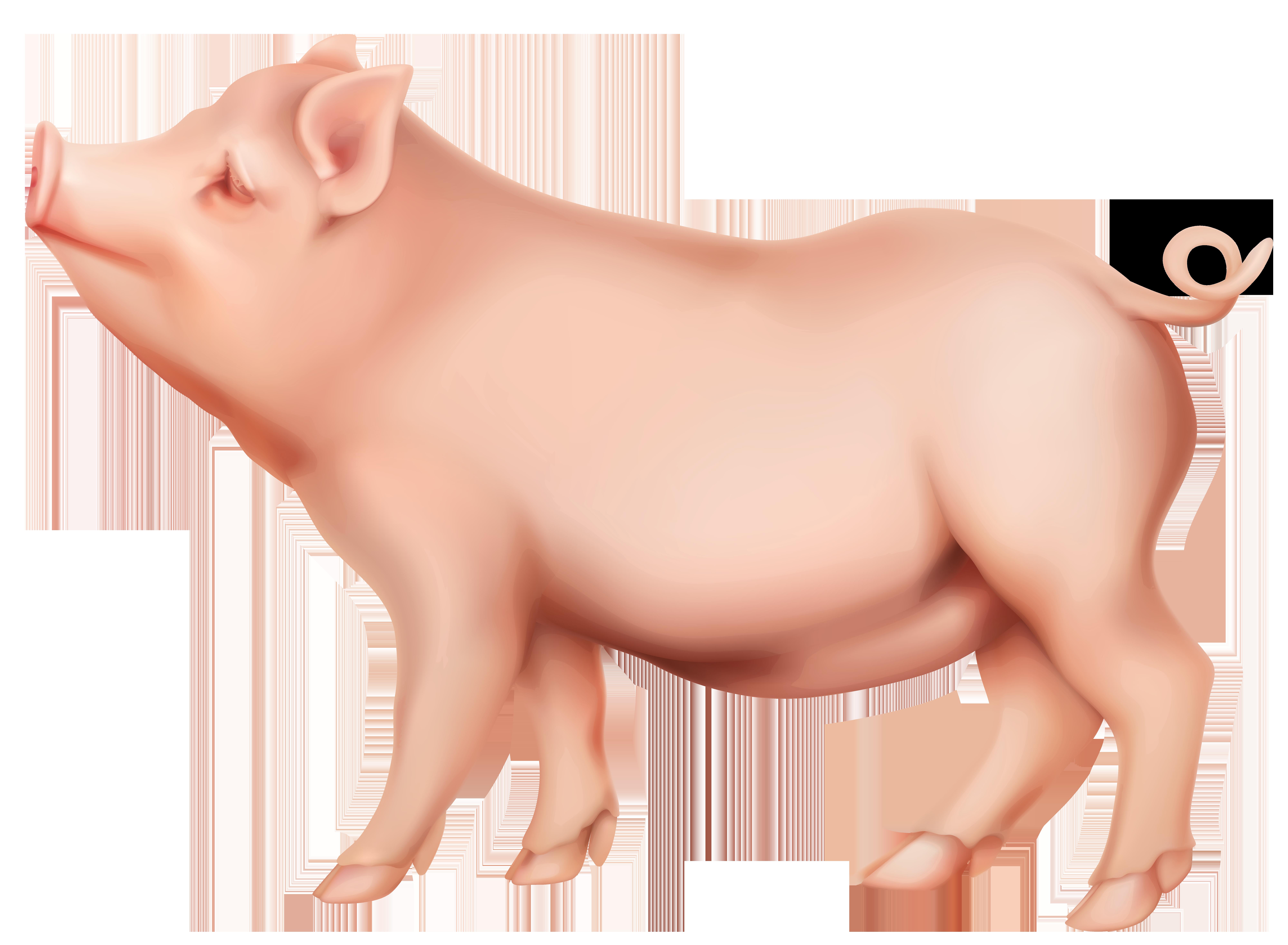 Clipart pig spring. Png clip art image