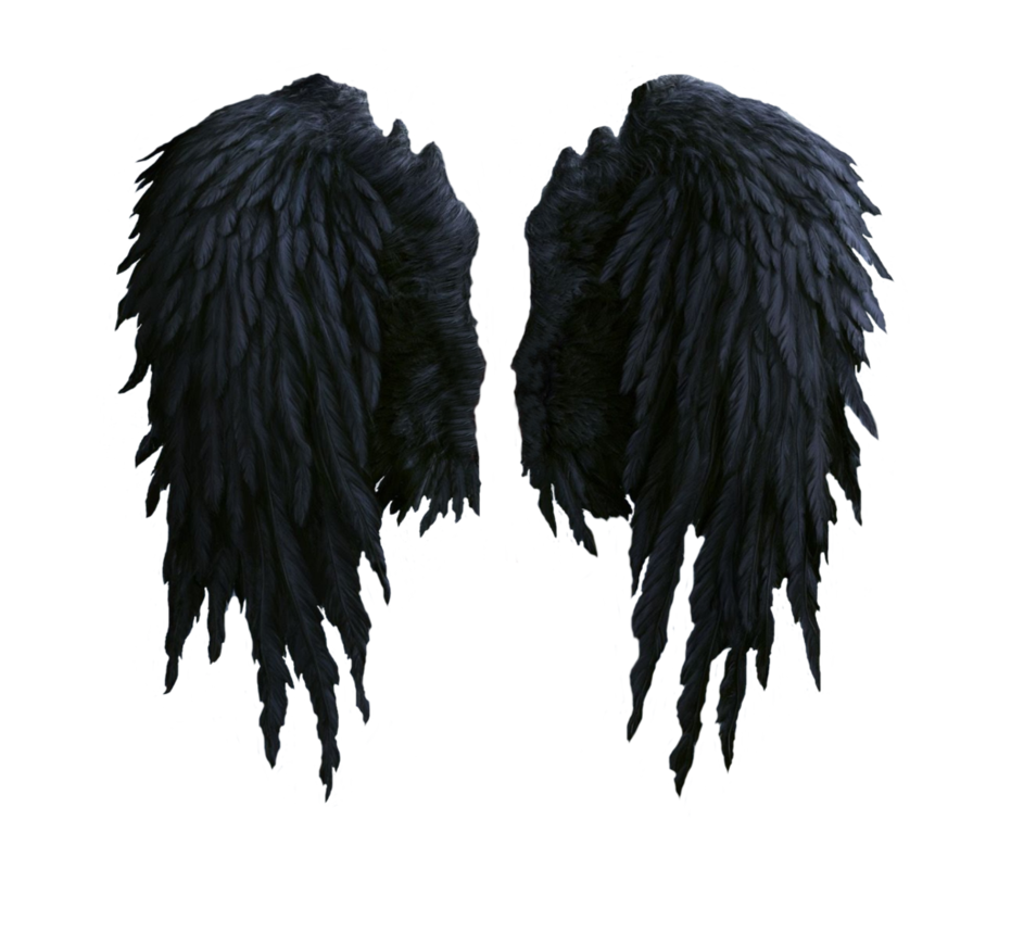 Angel wings vector png. Black stock by shadow
