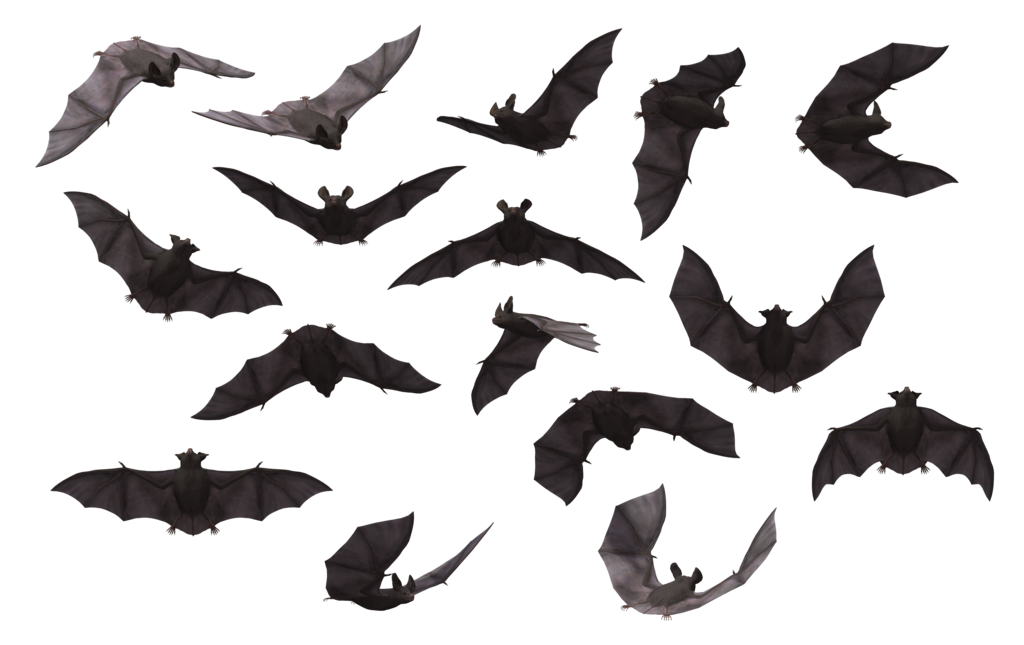 Clipart animals bat. Png images free download