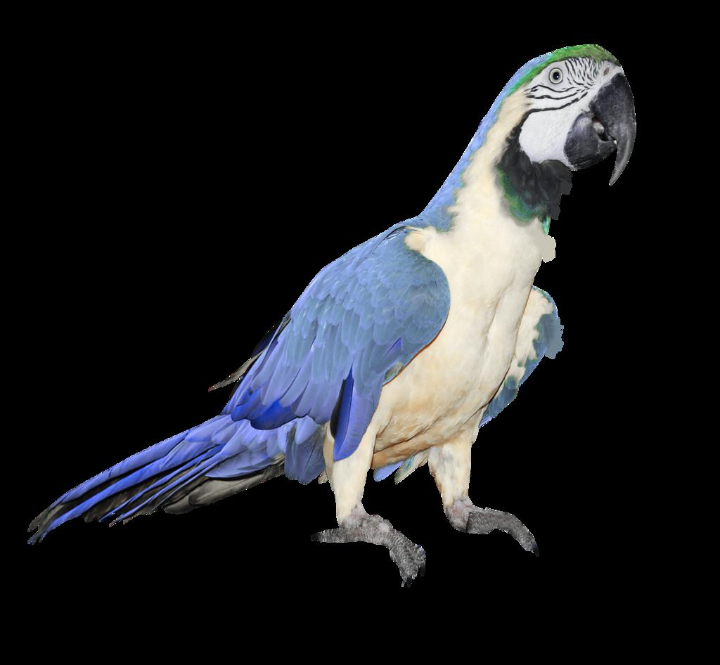 Parrot clipart beach.  printables pinterest decoupage