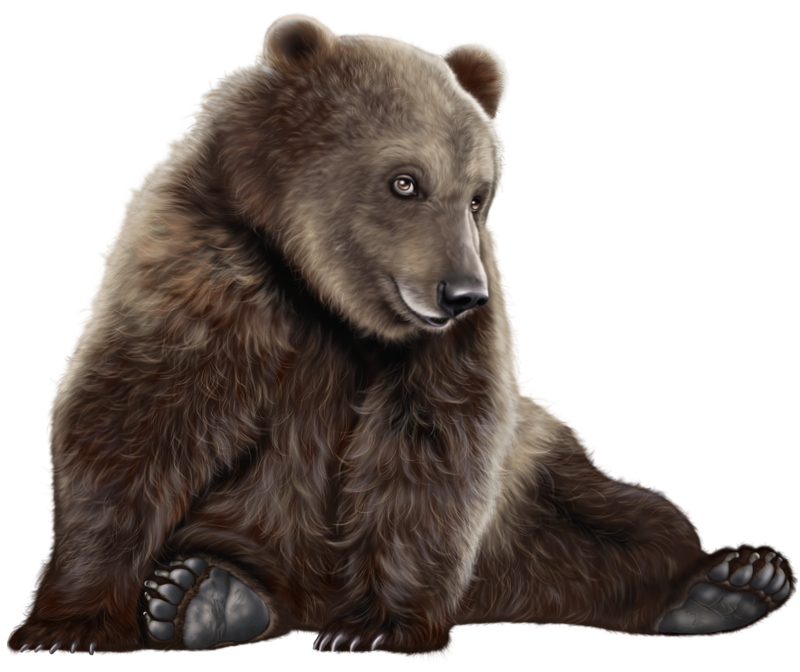 Png clip art best. Clipart bear american black bear