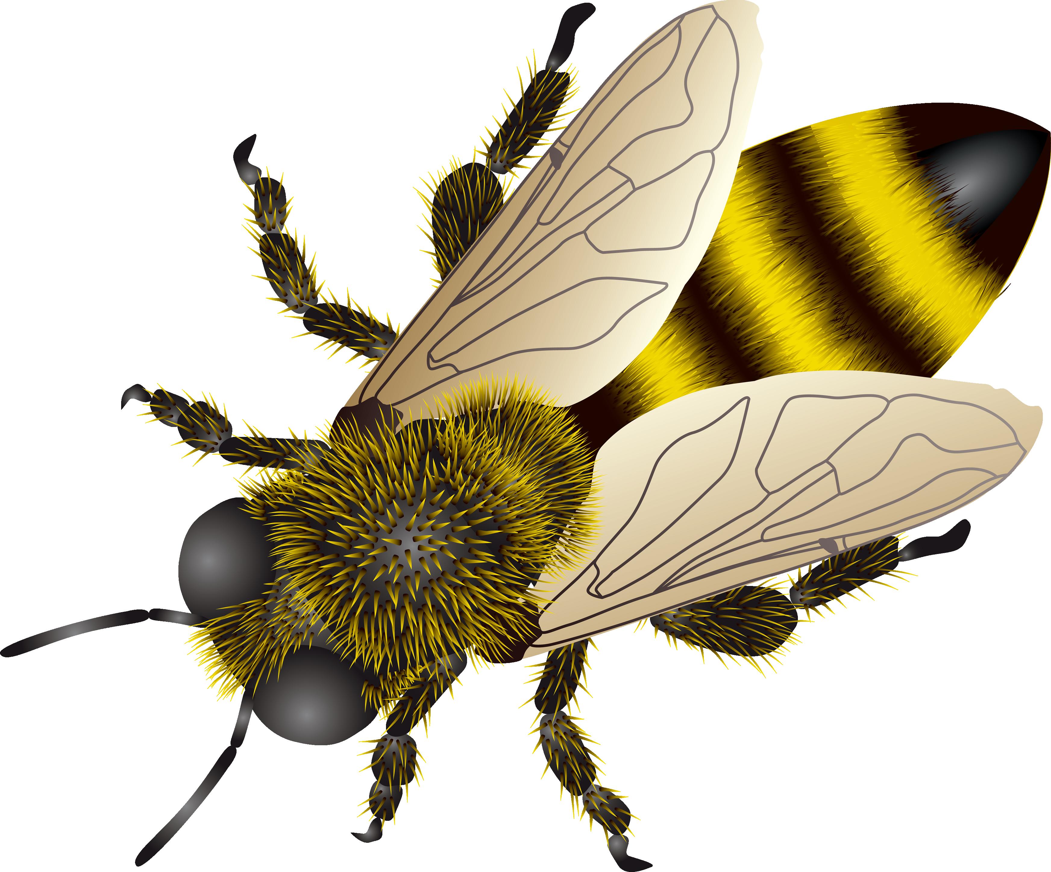 Hornet clipart buzzy. Animal bee wallpapers desktop
