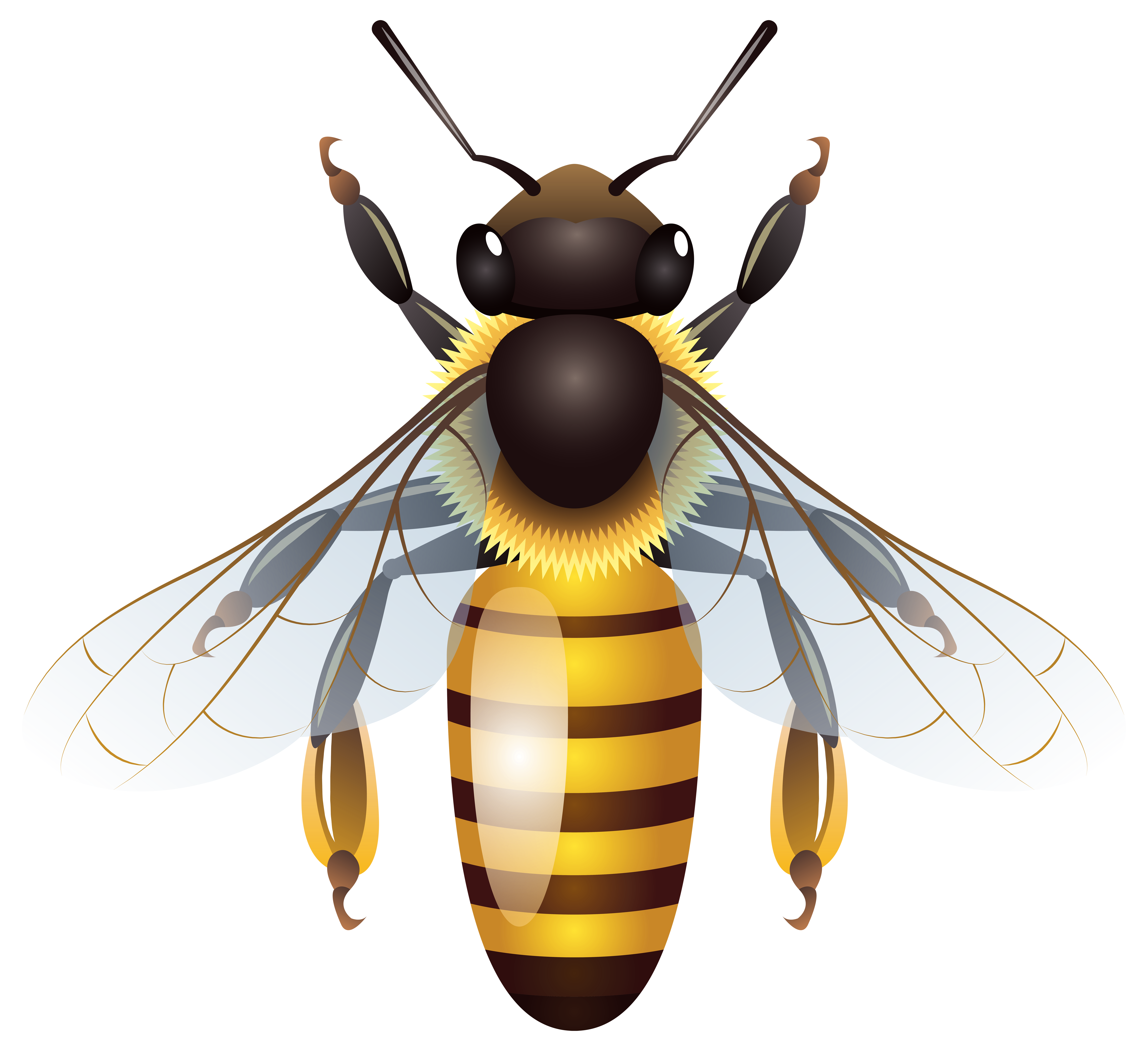 Insect clipart honey bee. Png clip art best