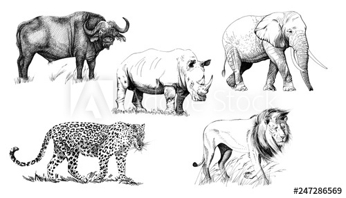 Clipart animals big 5. African five animal hand