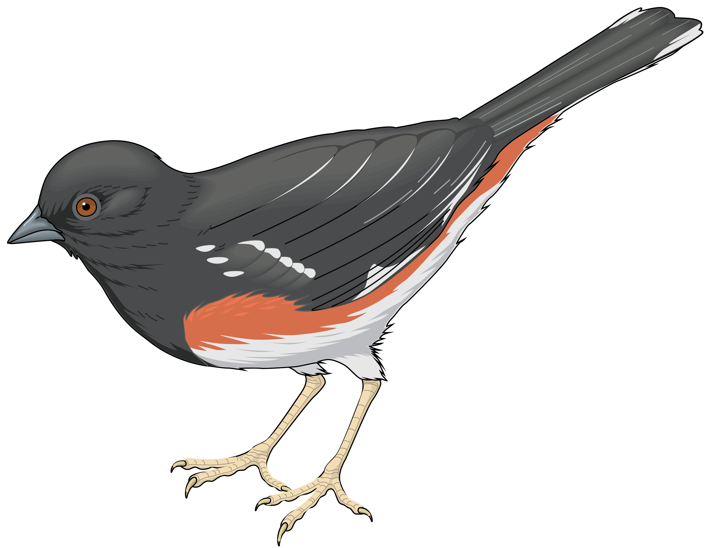 Grey bird png best. Clipart birds fish
