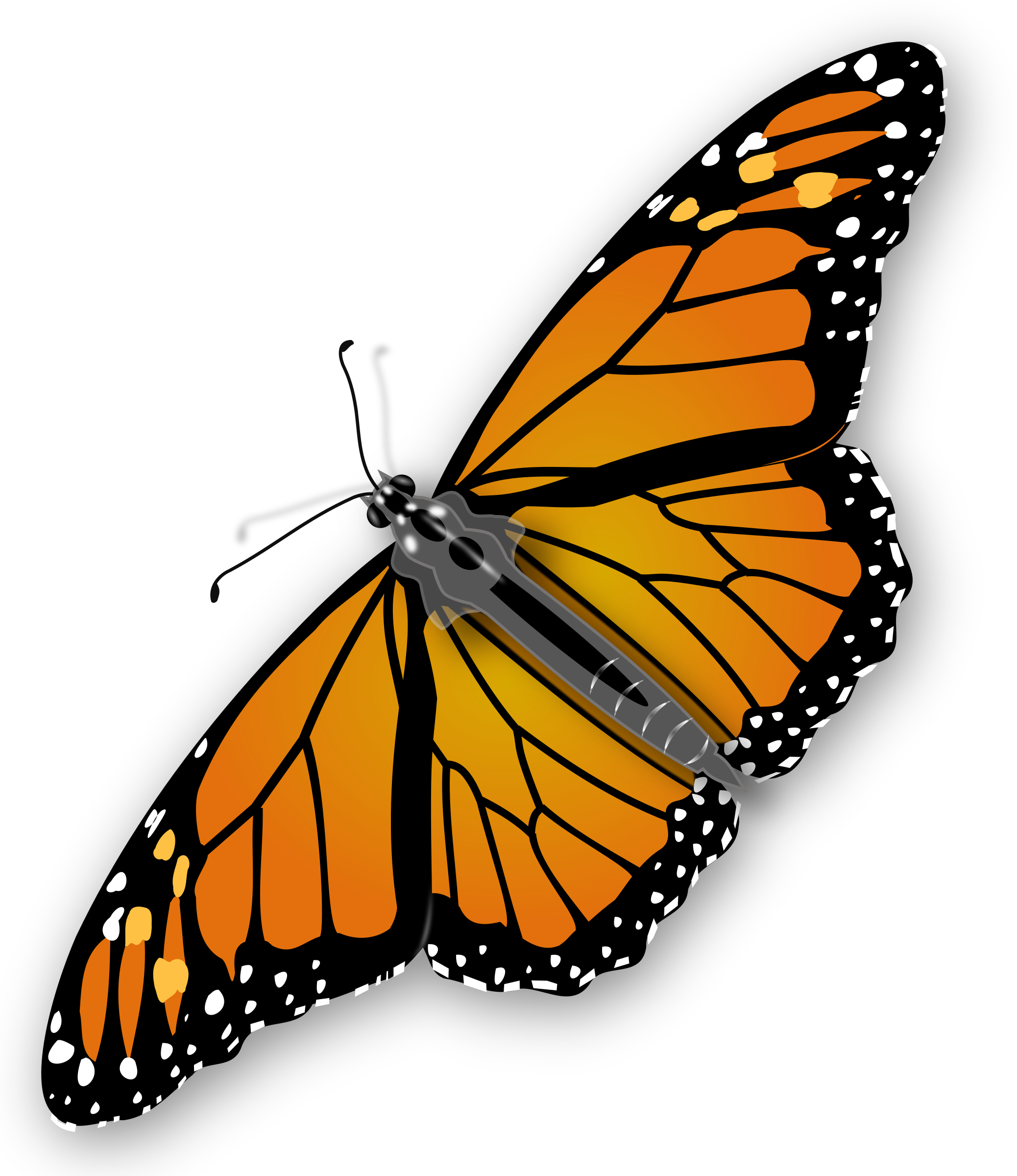 Clipart butterfly realistic. Monarch