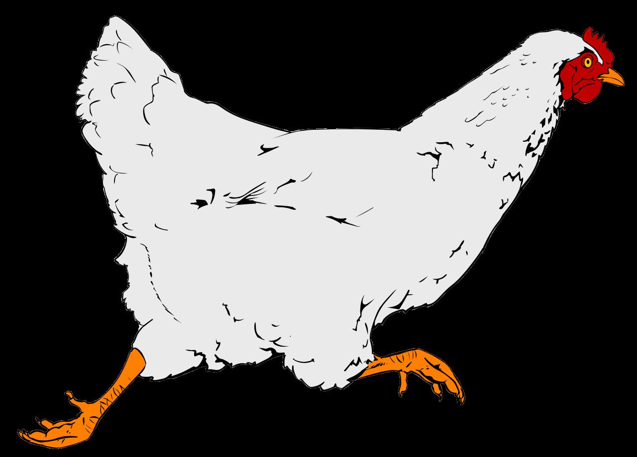 Hen clipart clip art. File chicken svg wikipedia