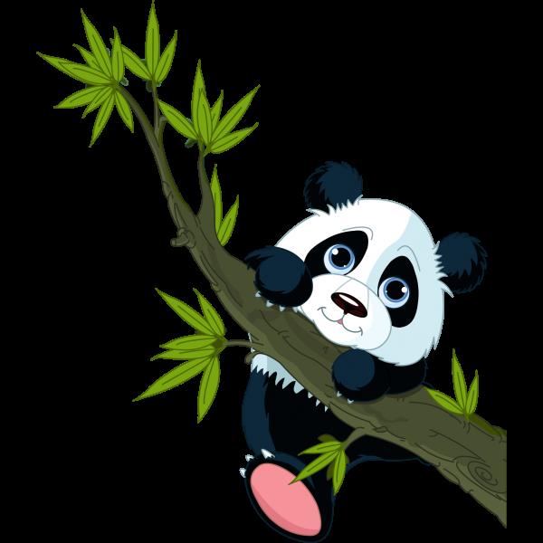 Panda bears cartoon images. Creation clipart animal
