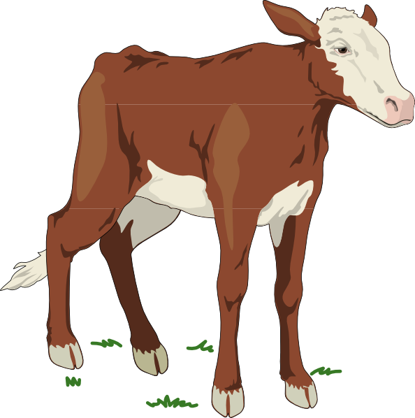 Cow clipart calf. Brown and white baby