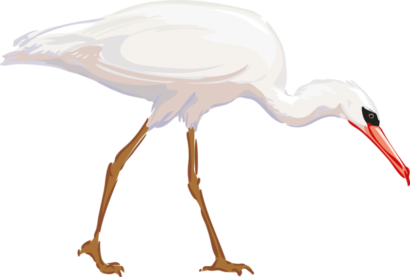 Clipart birds blue heron. Bird great egret clip