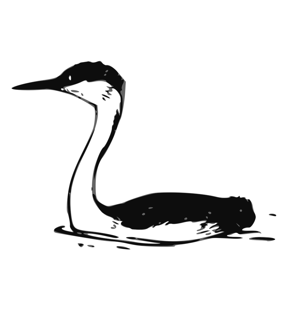Crane clipart animal. Bird free stock photo