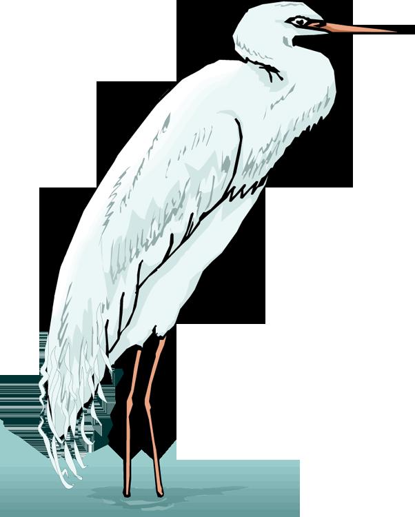 Crane clipart animal. Free heron