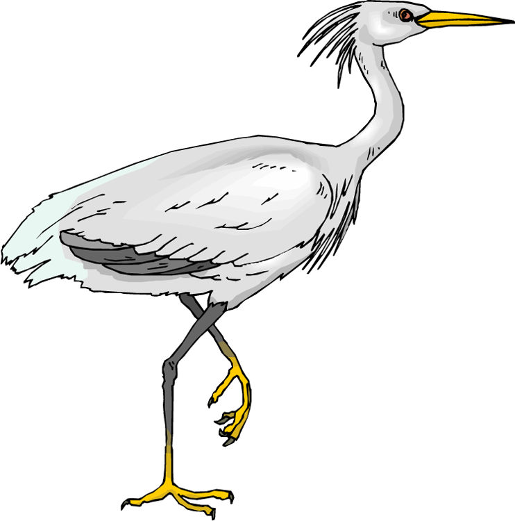 collection of crane. Stork clipart heron