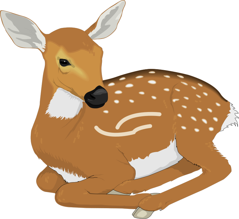 Hamster clipart forest animal. Deer pictures royalty free