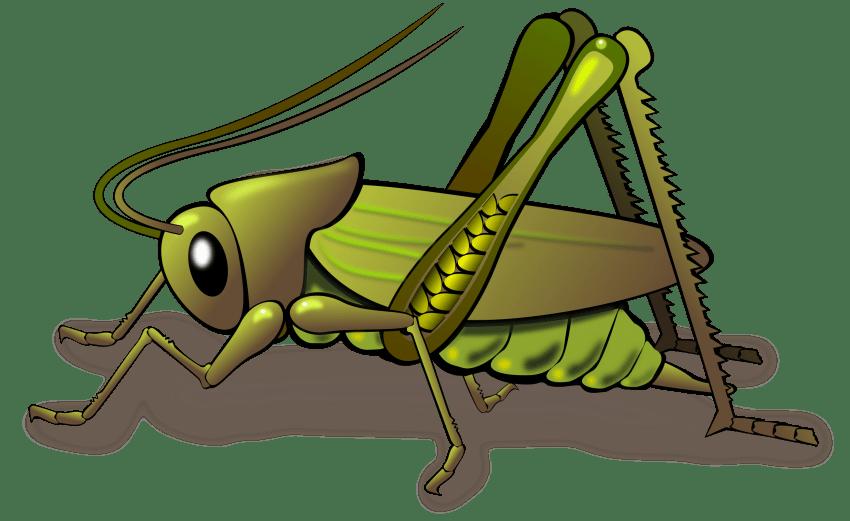 jungle clipart bug