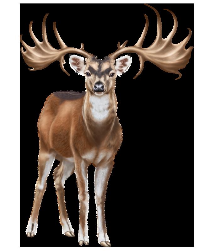 deer clipart small deer