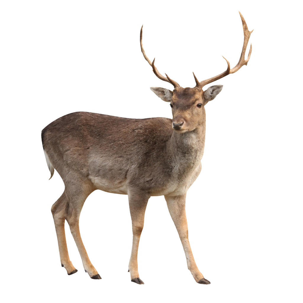 Deer clipart whitetail deer. Png web icons icon